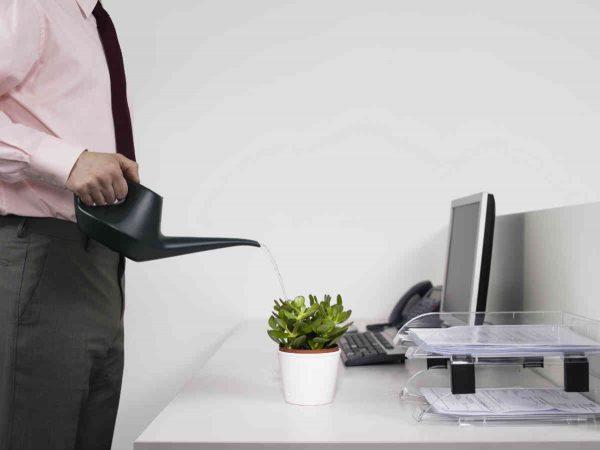muskarac zaliva cvece u kancelariji