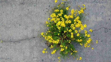 cveće-iz-betona