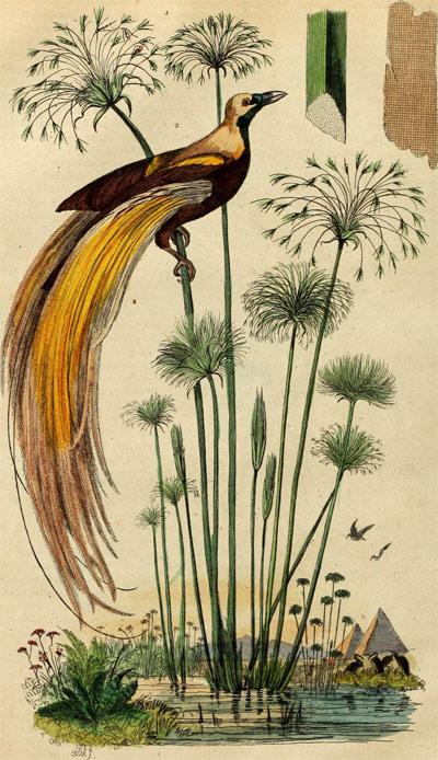 Paun na papirusu