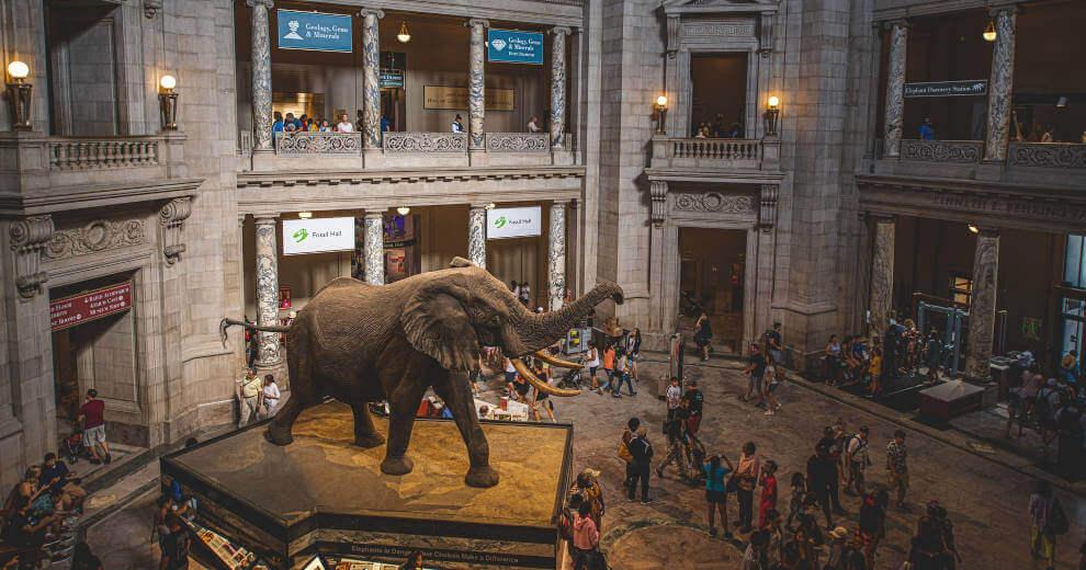 muzej-prirodne-istorije-vašington